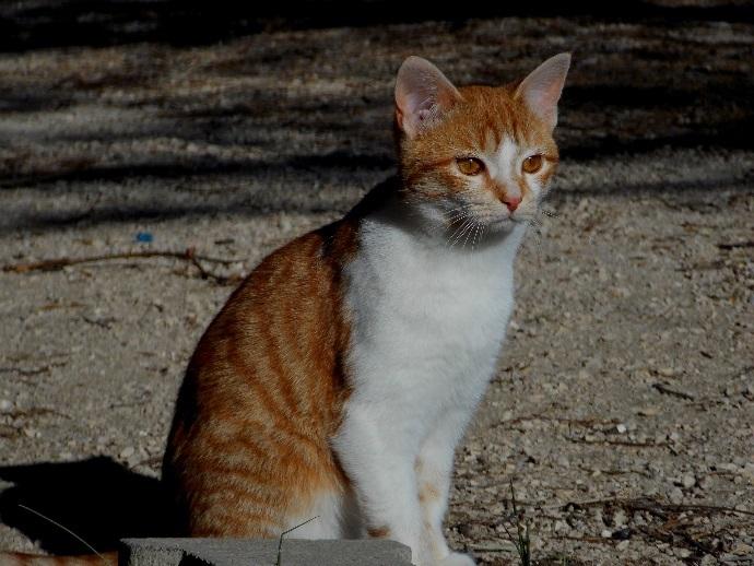 Allergey test in cats
