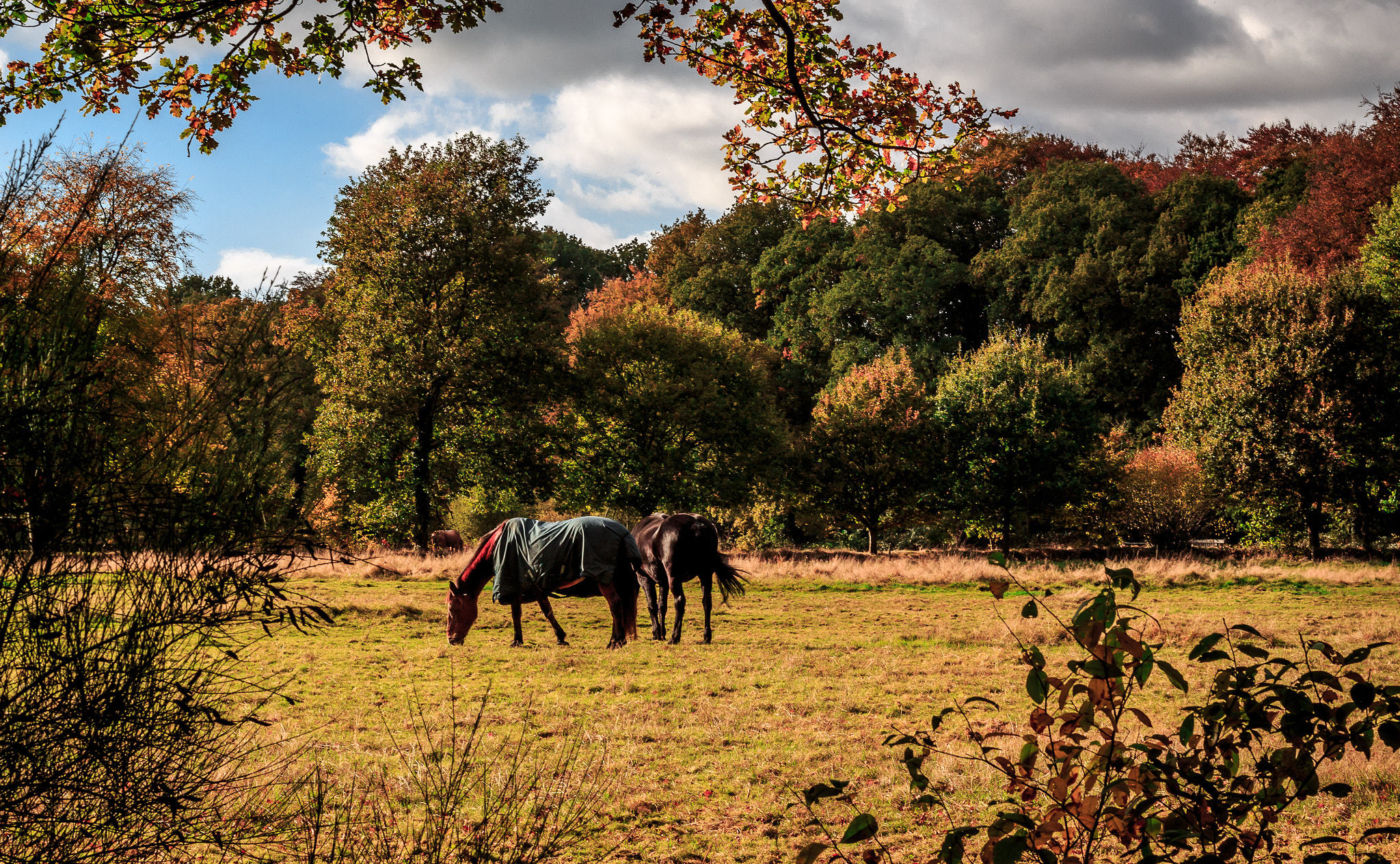 two horses in a field surrounded by trees in the autumn
