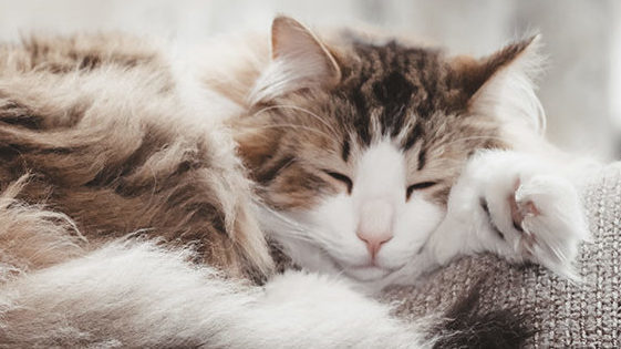 cat upper respiratory infections