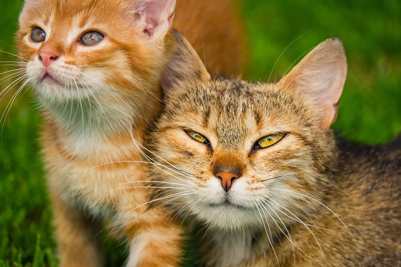 Common Diseases in Cats and Kittens