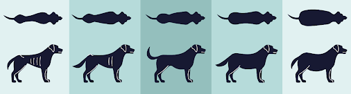 Dog BCS