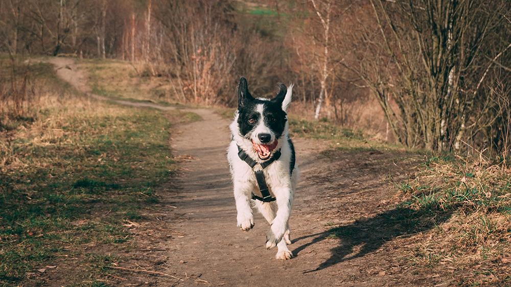 Dog Deworming