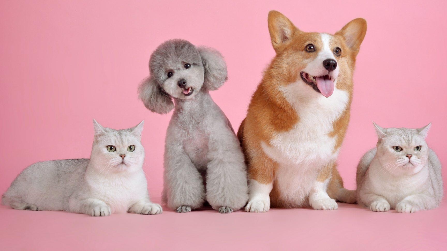Home Pet Exams