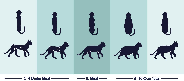 Weight Cat UK