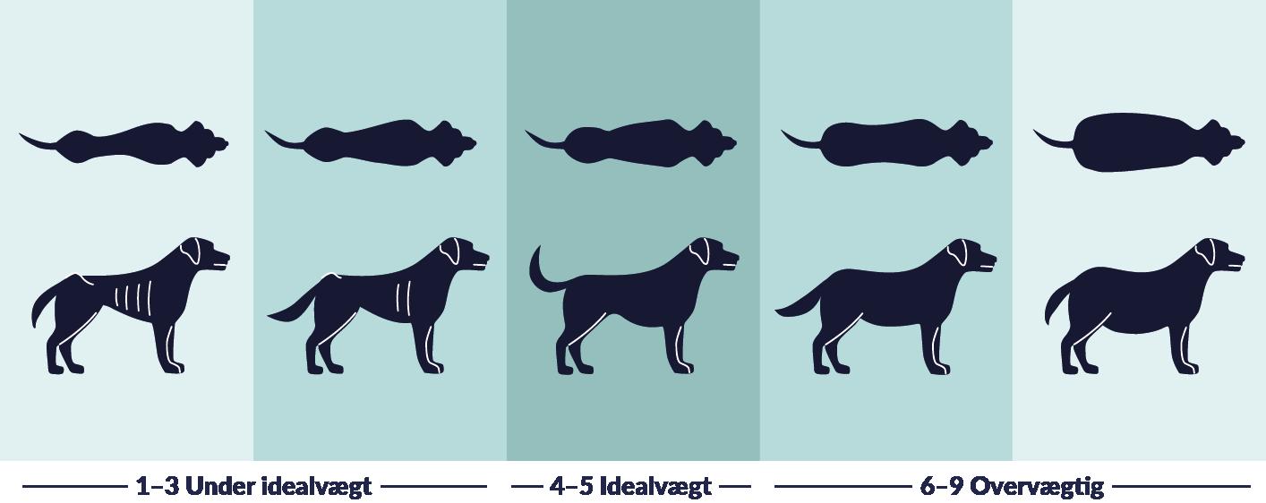 Weight Dog DK
