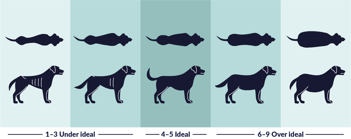 Weight Dog - Body Condition Scoring (BCS) in Dogs