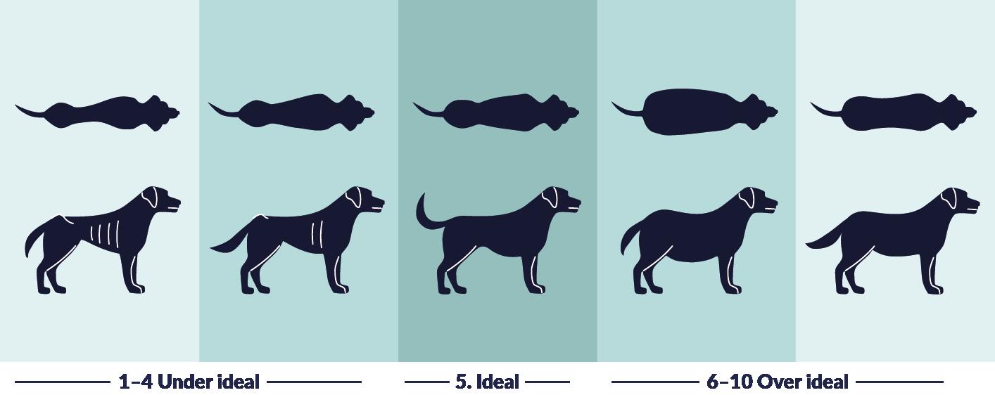 Weight Dog UK
