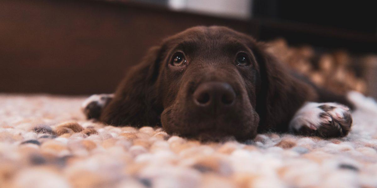 Koira Suolitukos Ripuli