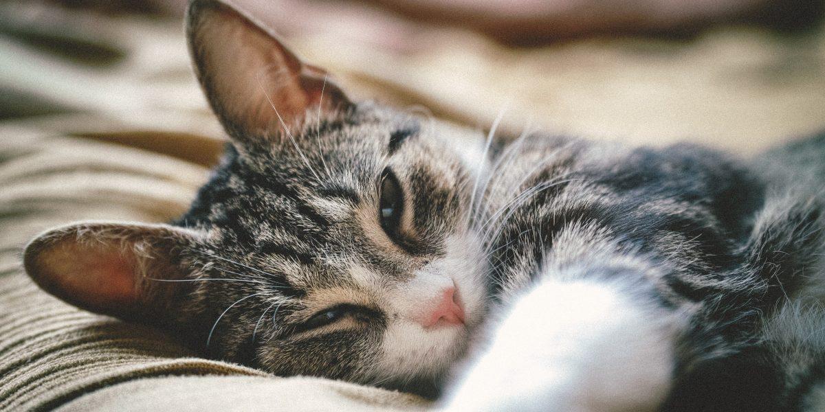 katt förkyld symtom