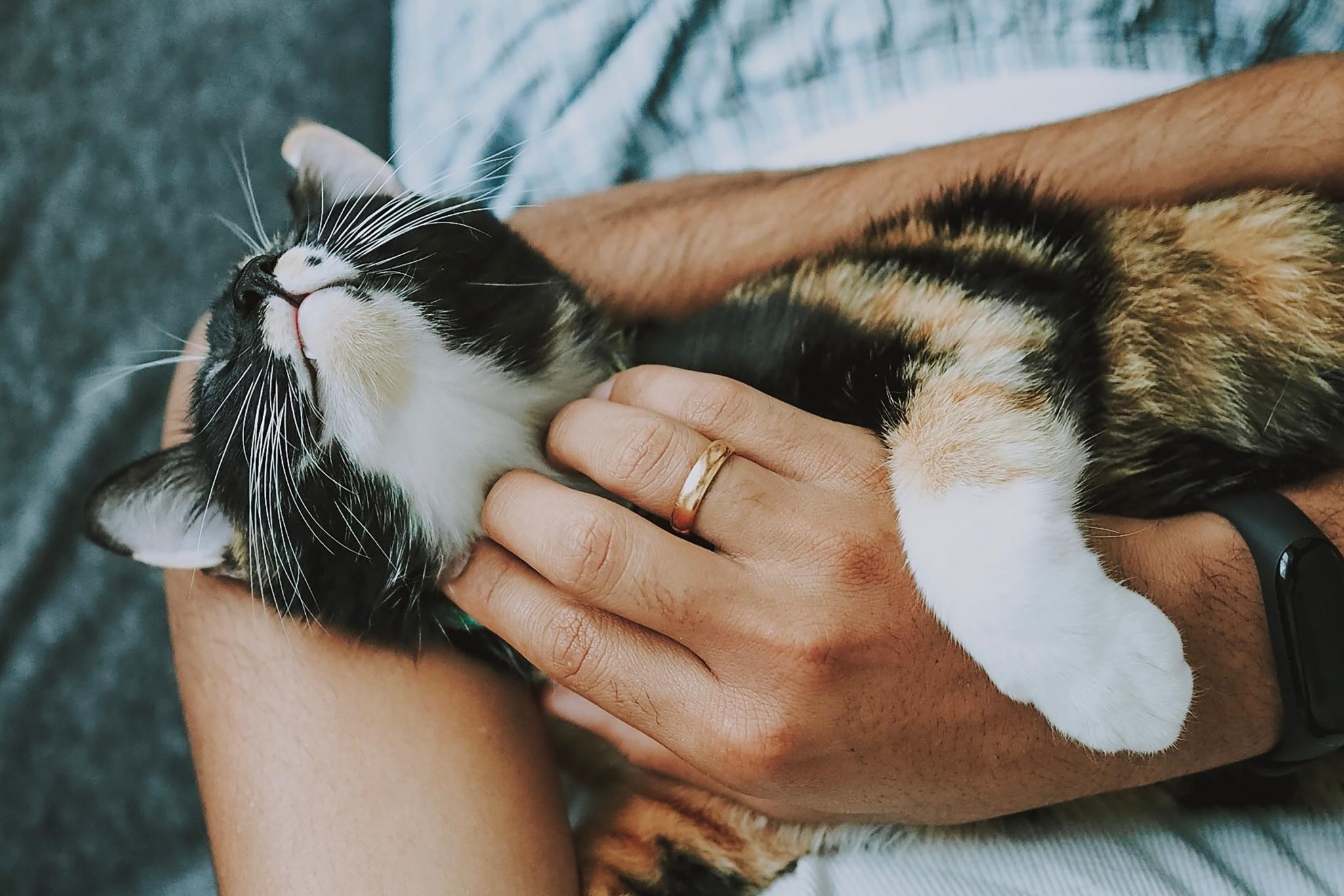 Activate cat