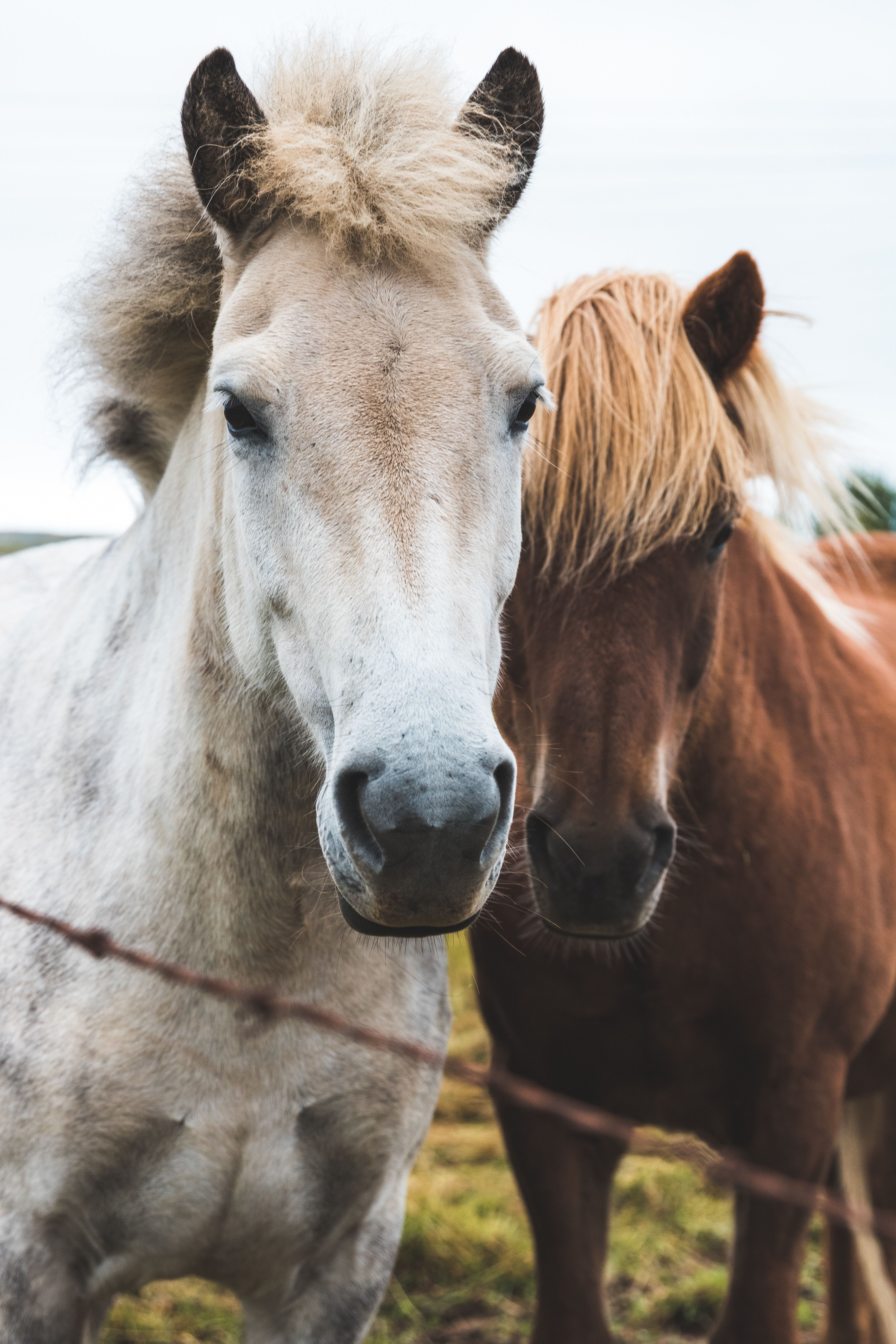 Horses side by side in behind fence