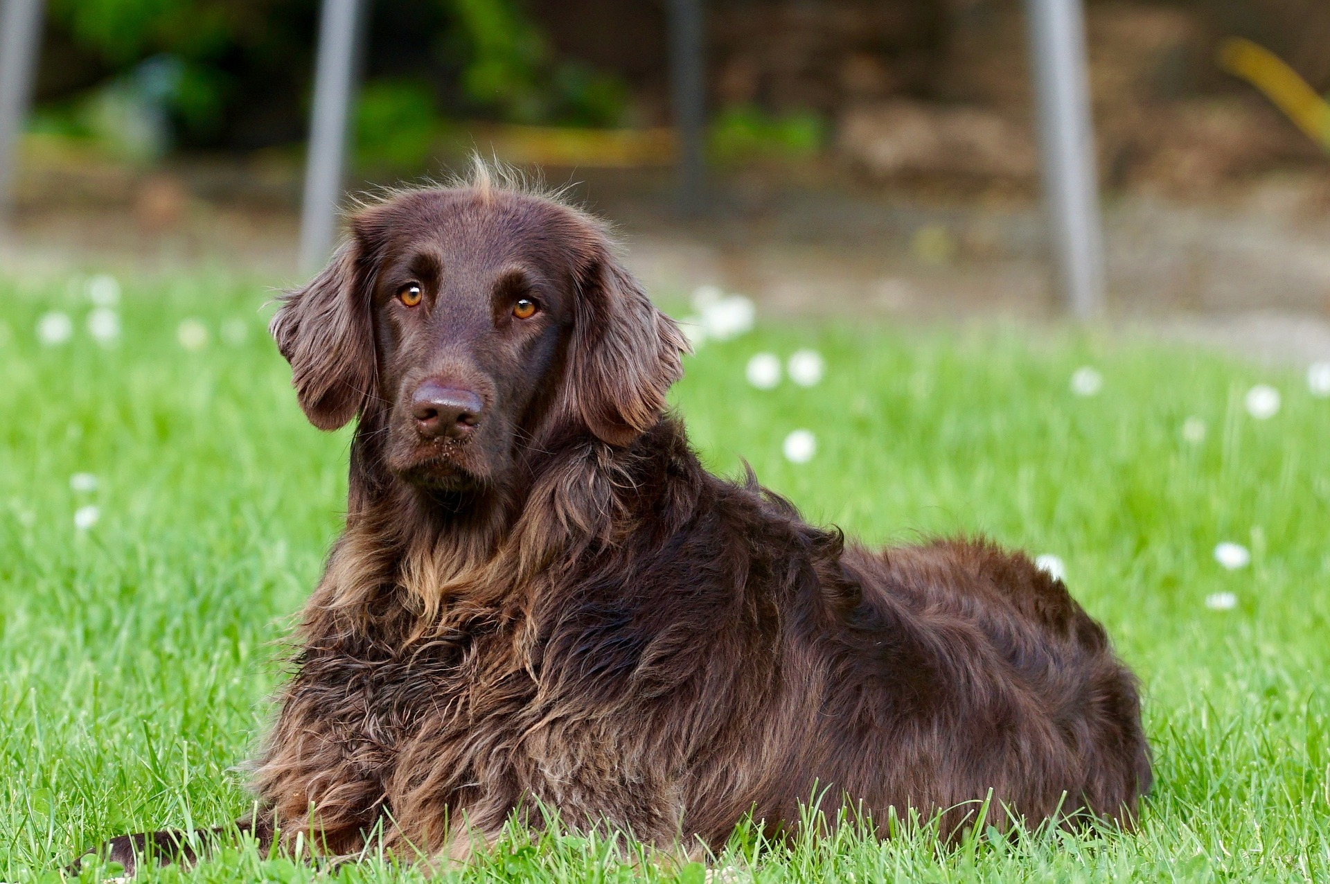 Are ticks dangerous to dogs