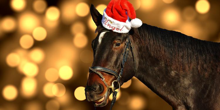 Joulun erikoisartikkeli hevosenomistajille