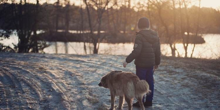 9 Important tips for dog owners during the winter