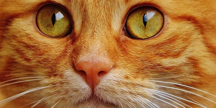 katt öga rinner
