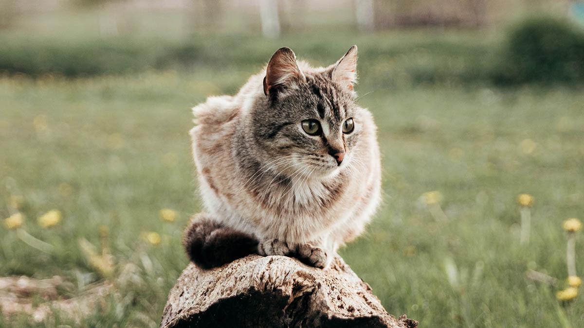 Avmaskning av katt