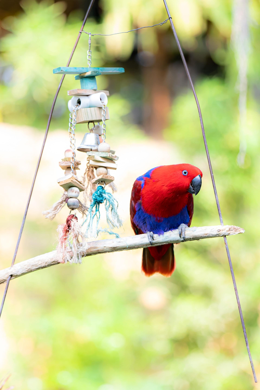 bird feather picking