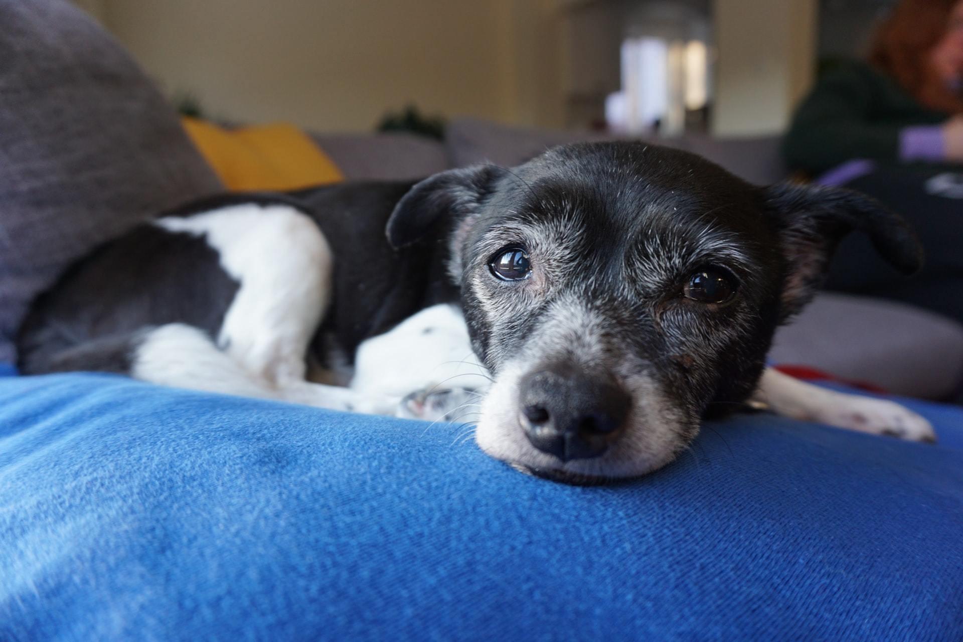 Blind dog care