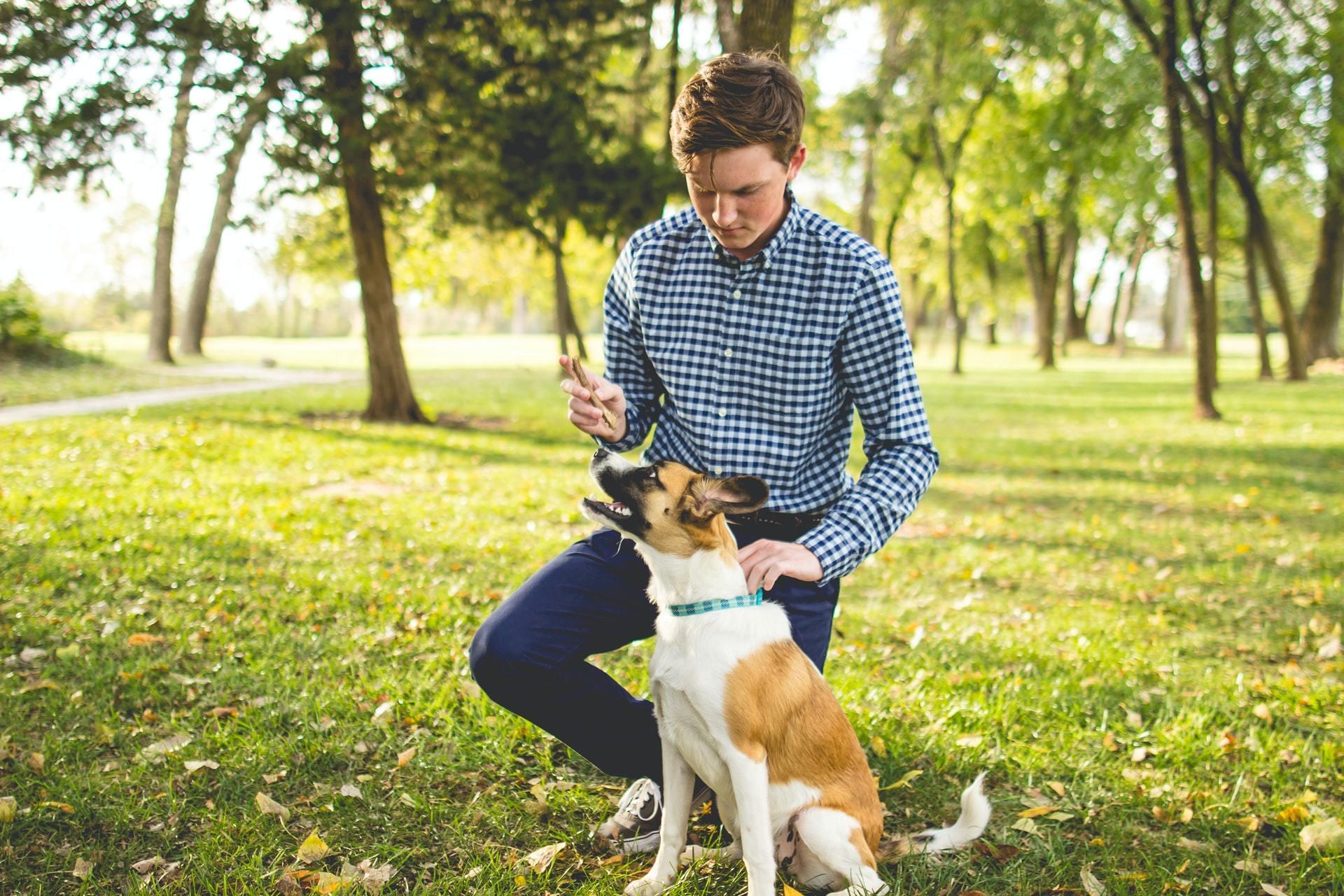 can dogs take zantac