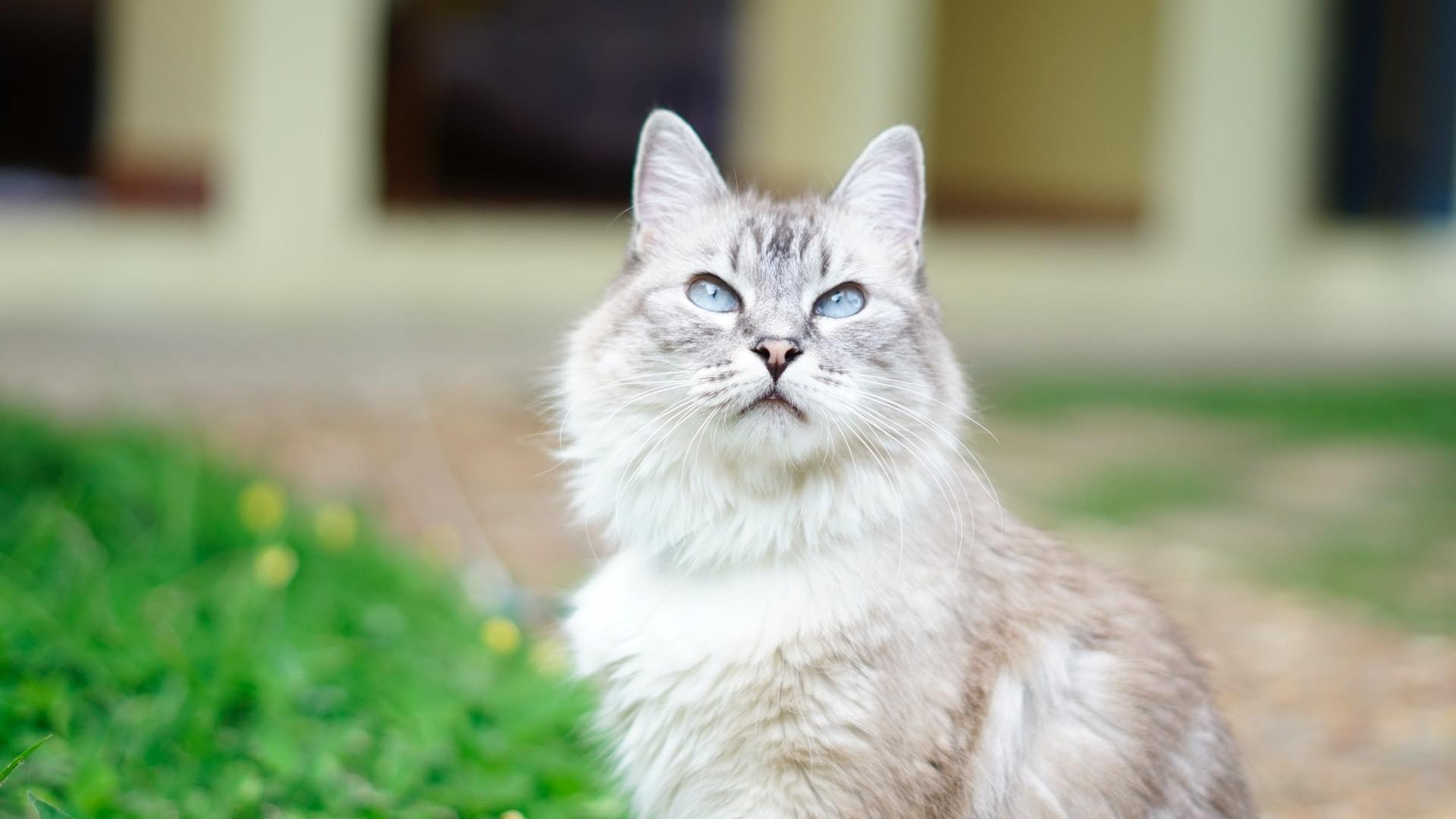 cat GI tract