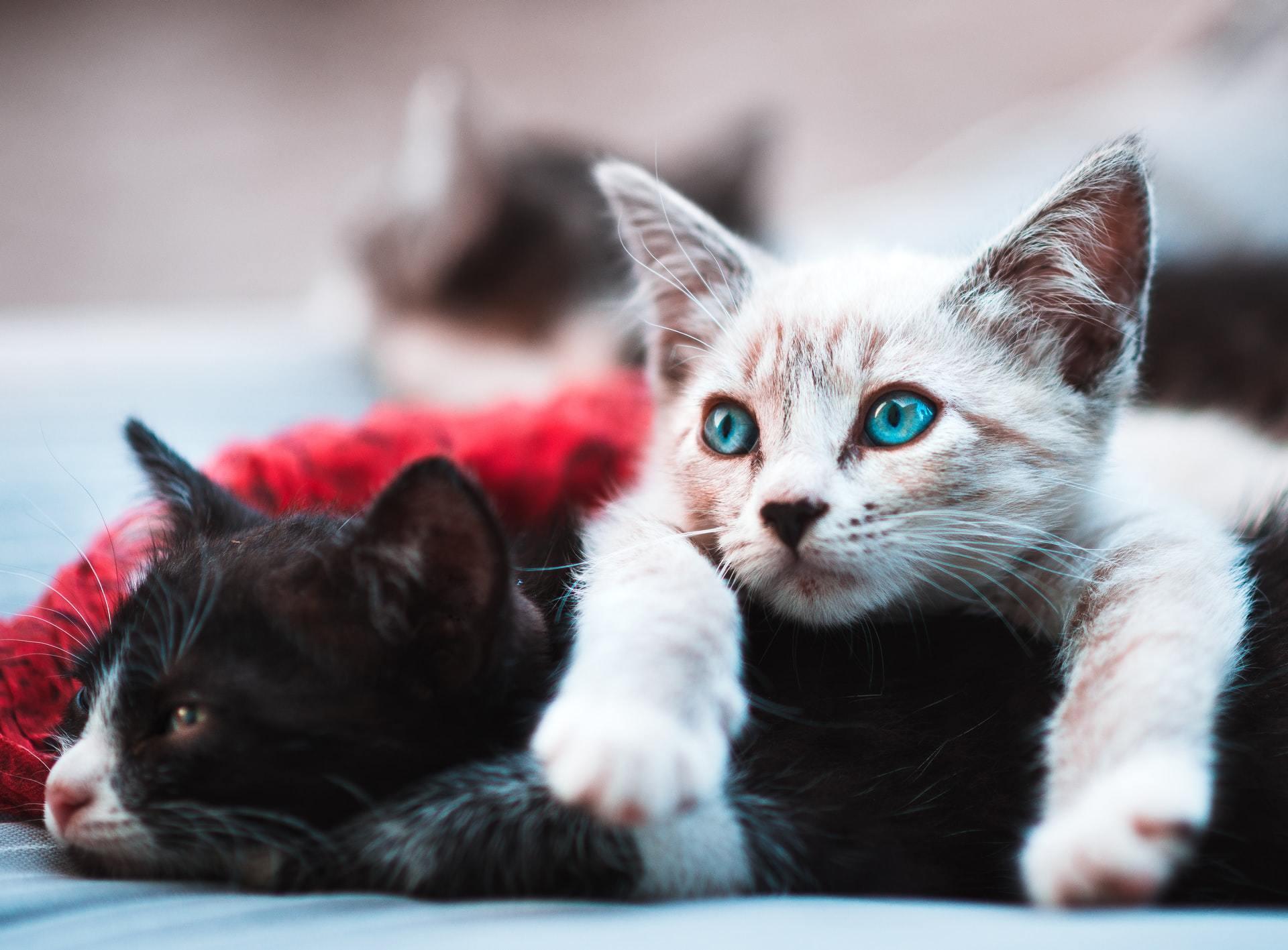 cat and dog pneumonia