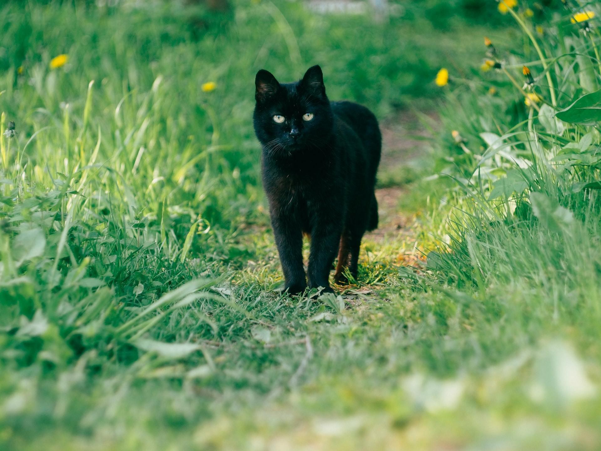 cat dandruff causes