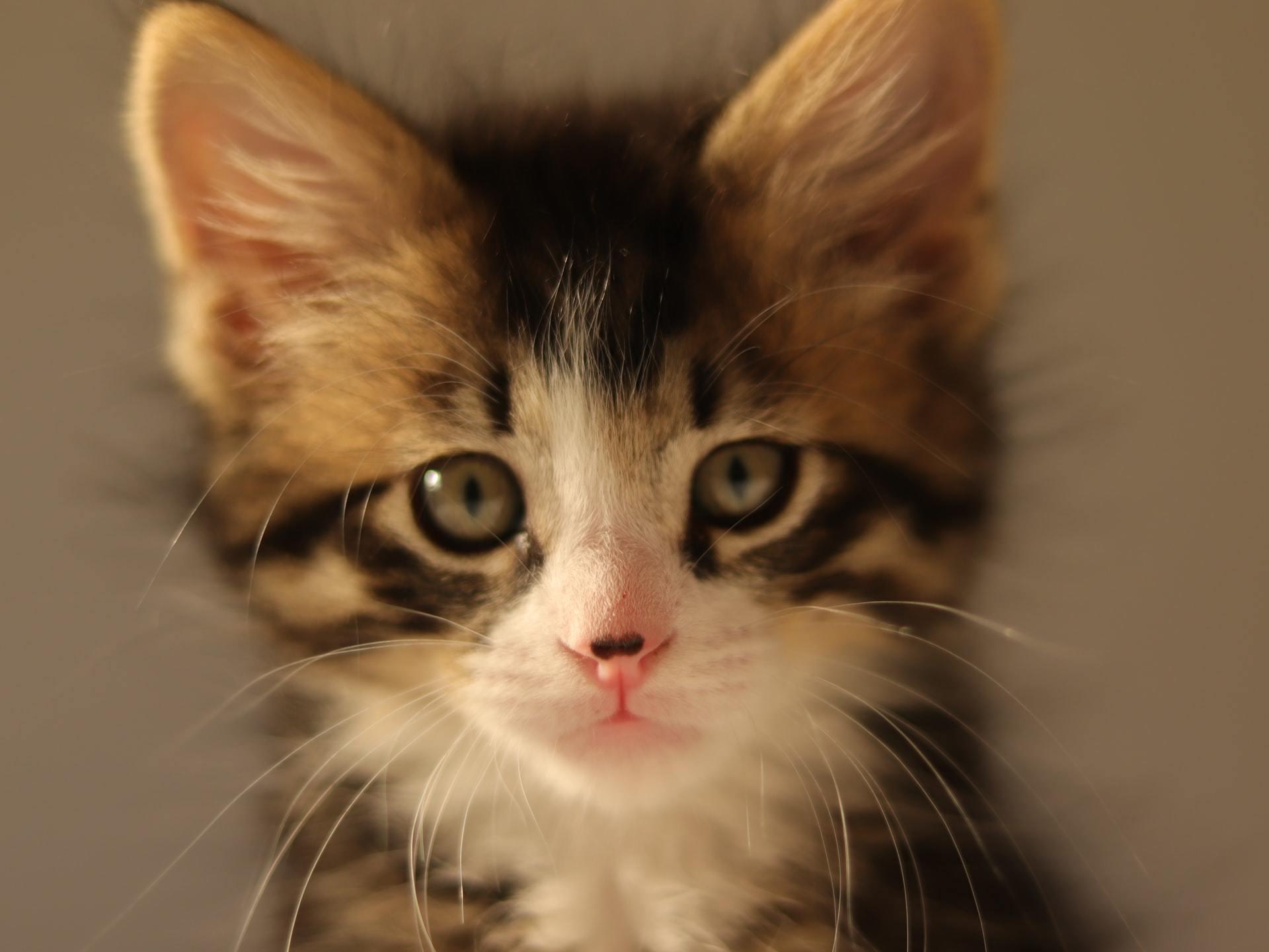 cat diarrhea treatment