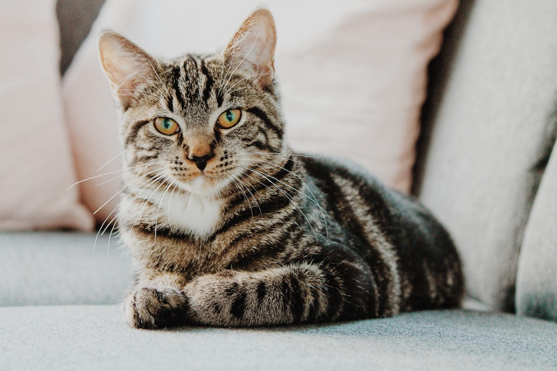 cat hyperthyroid treatment