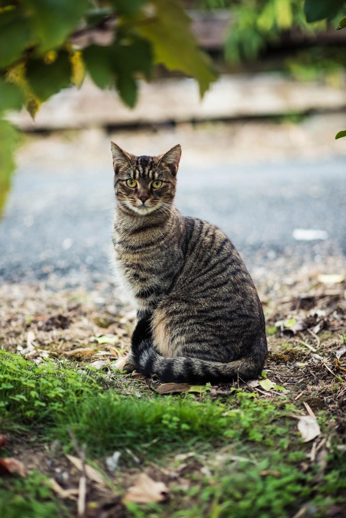 cat kidney failure