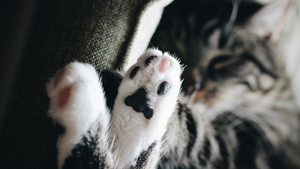Kastrering katt