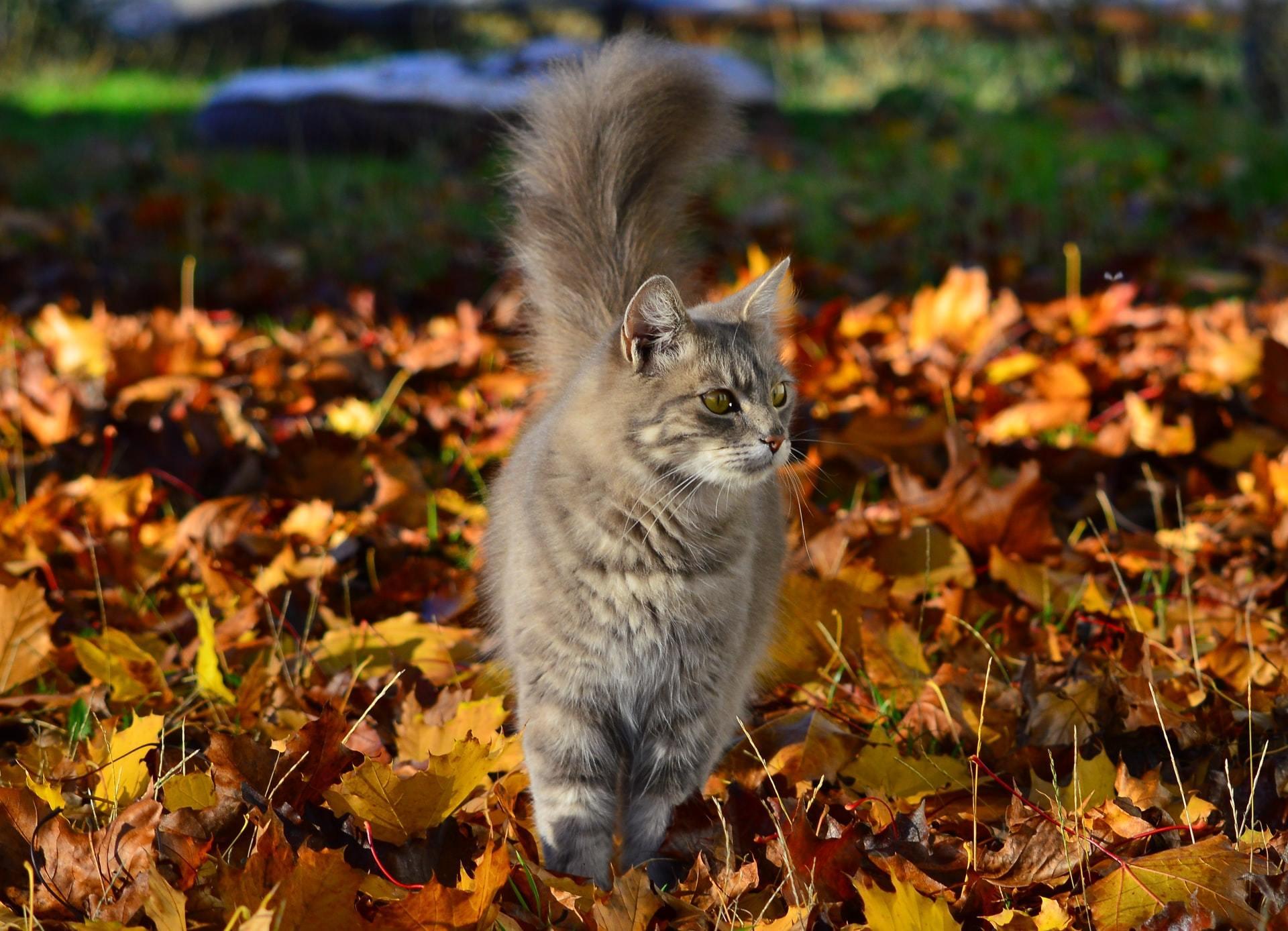 cat tick prevention