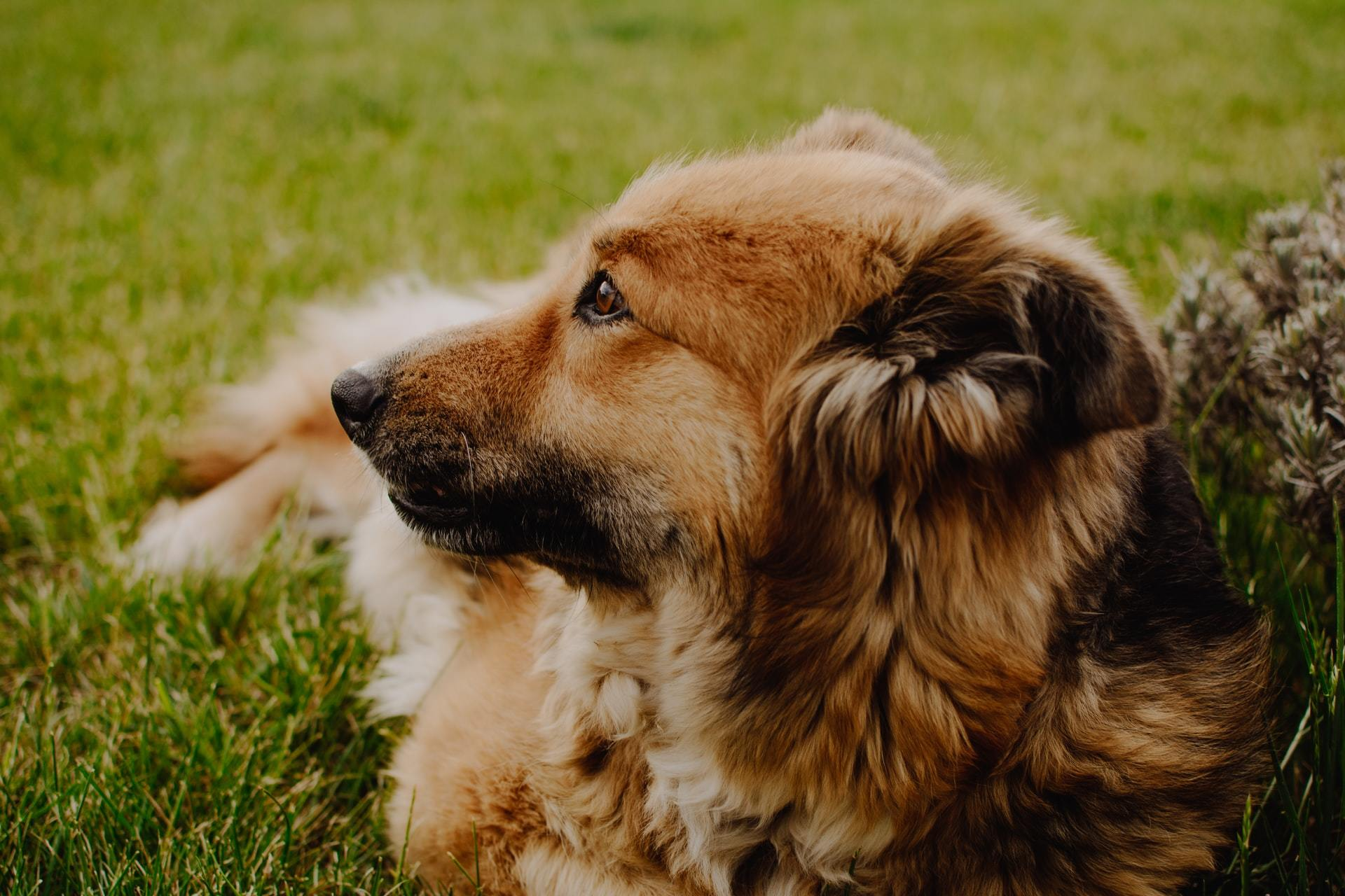 causes of dog coughing