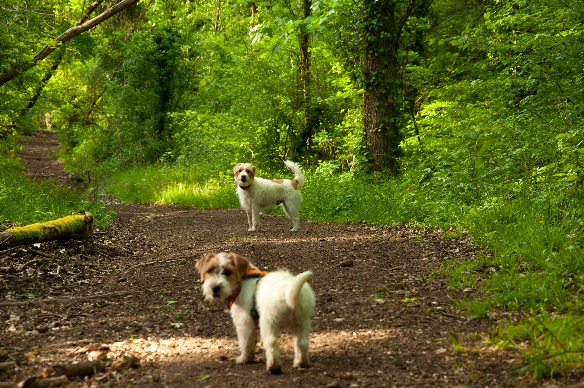 forest dogs