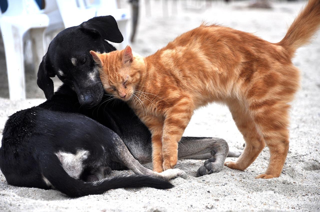dog ate cat food