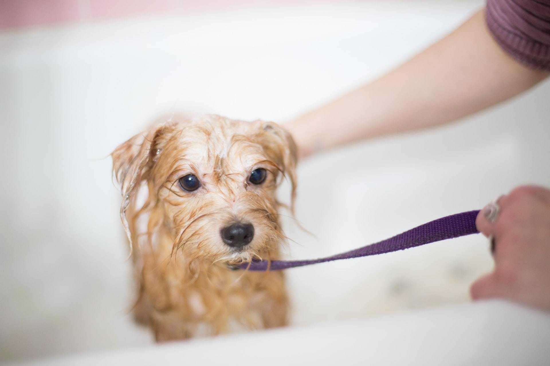 dog bath tips