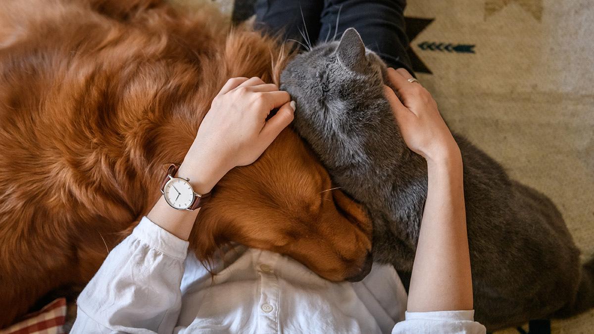 Dog cat human