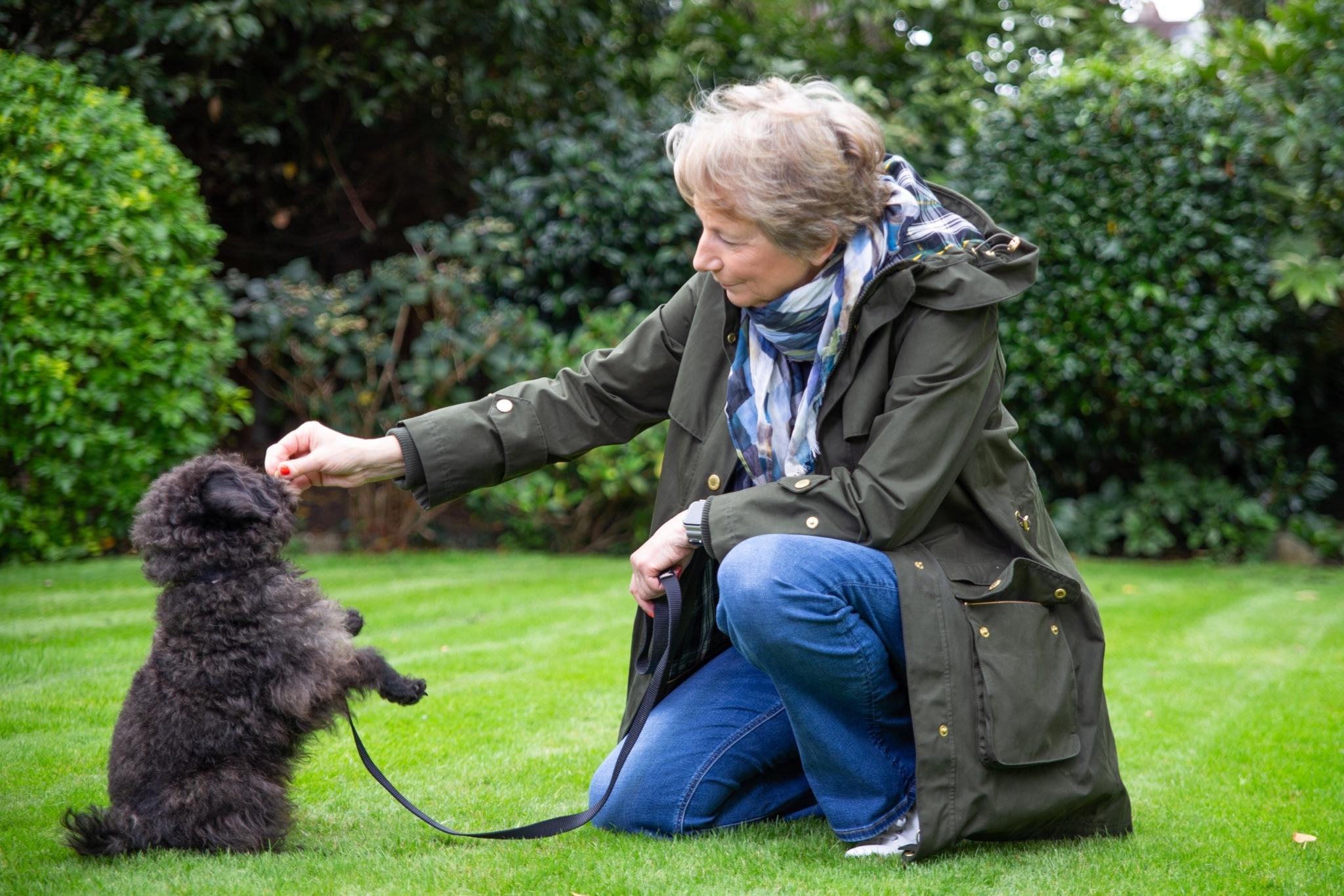 Dog coach teaching dog to sit