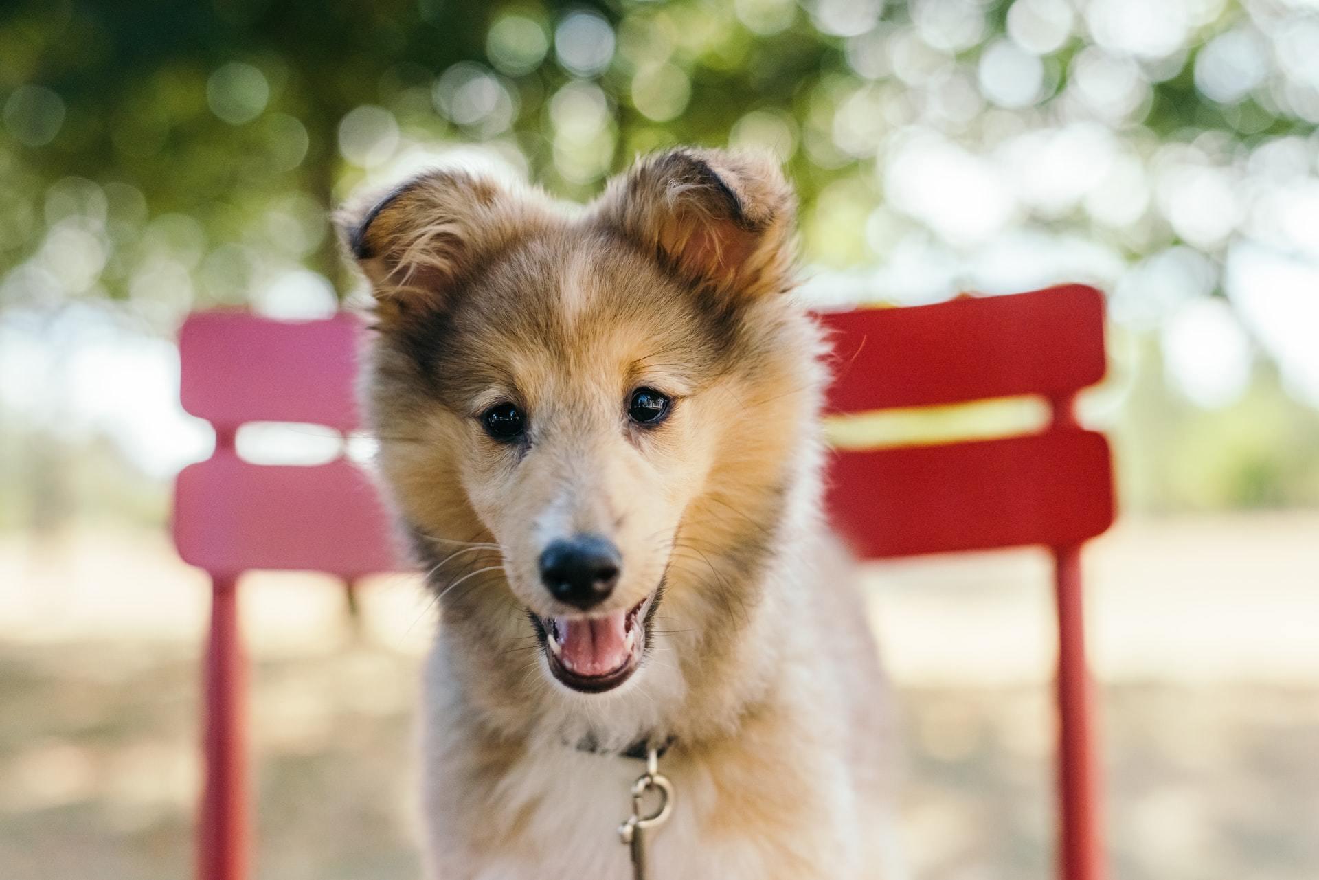 dog ear mite treatment