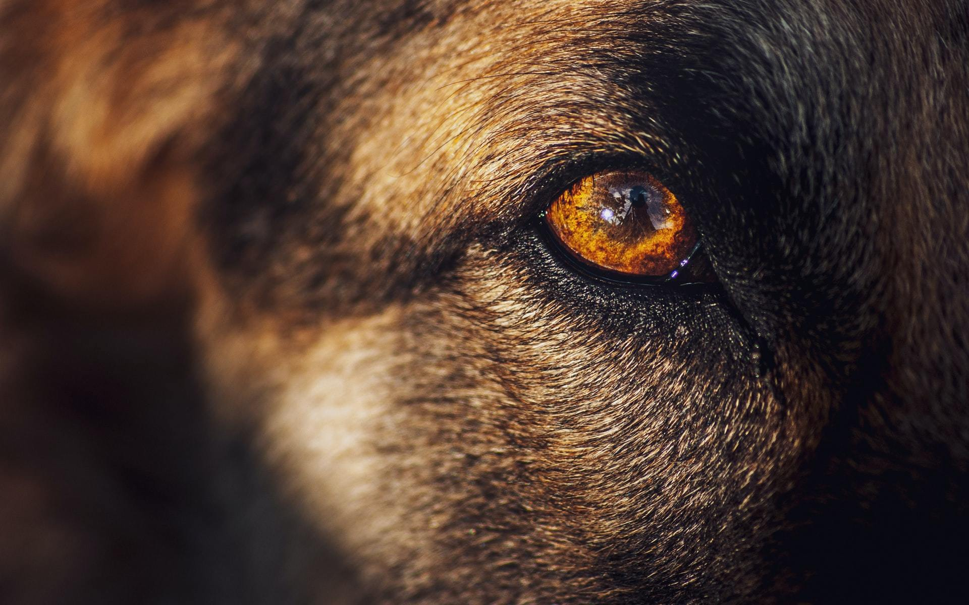 dog eye changes