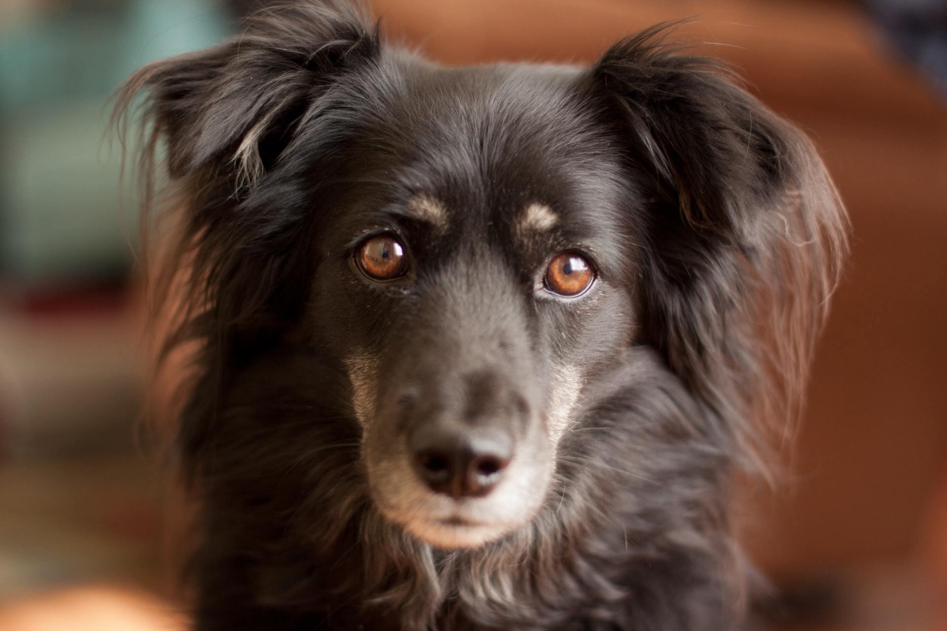 dog lymph nodes