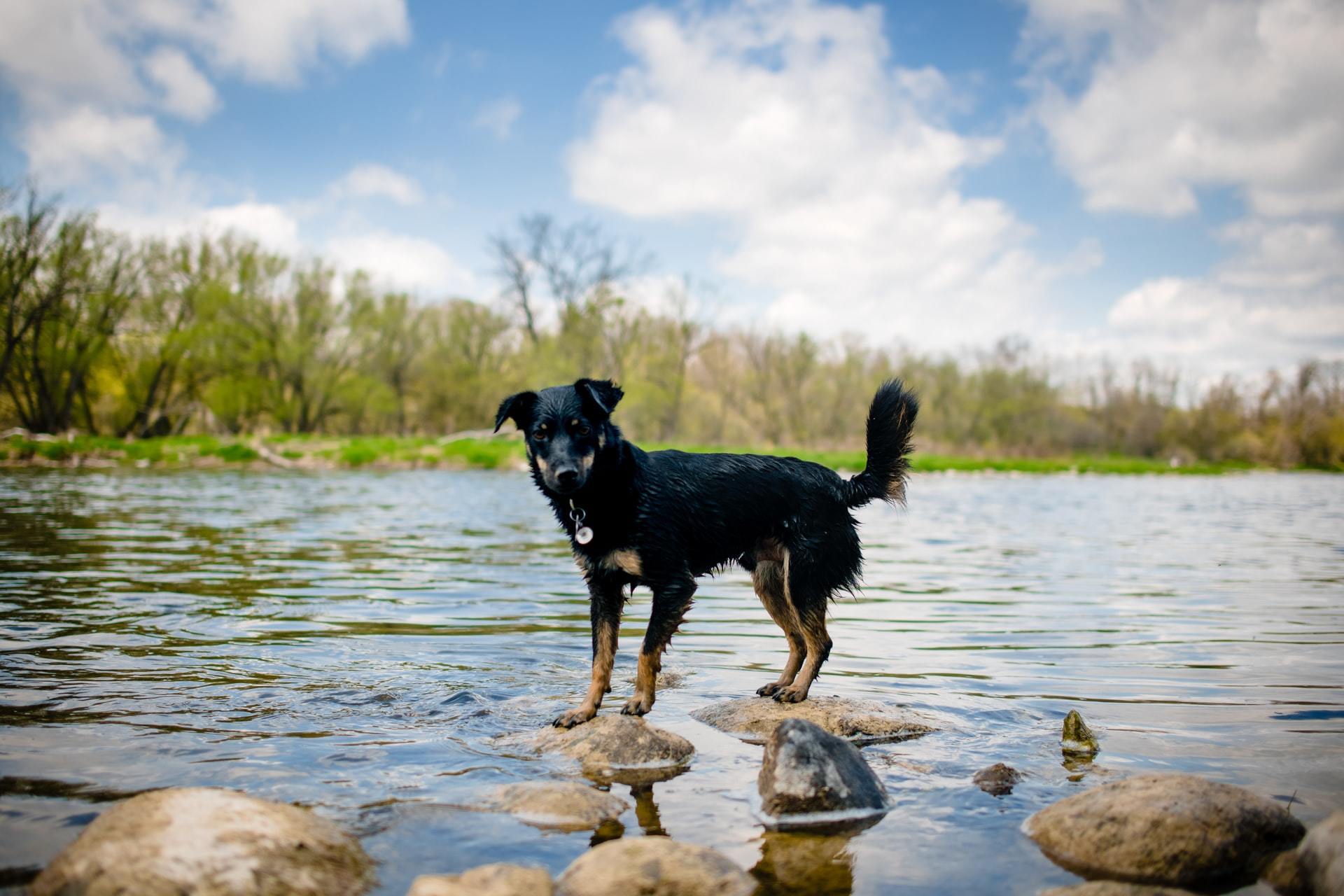 dog river sky