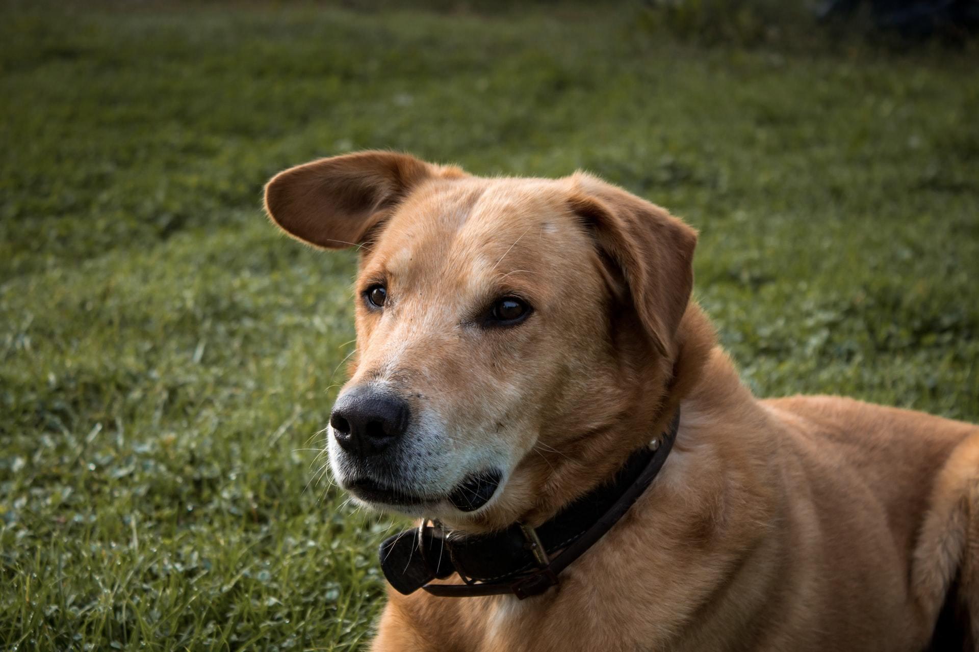 dog ruptured eardrum