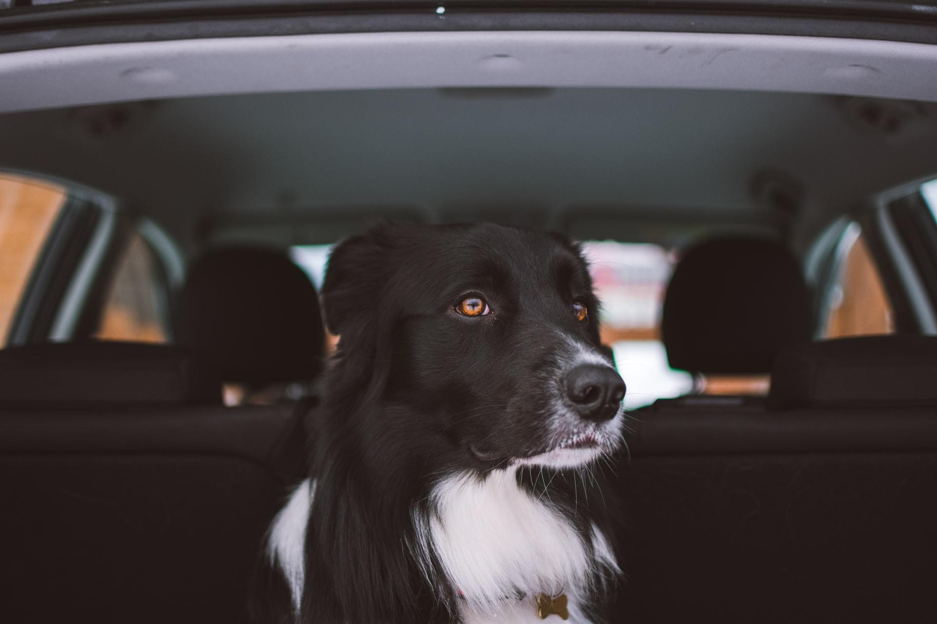 dog travel tips