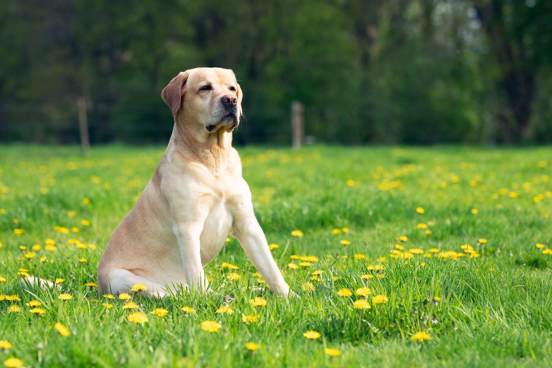 dog vomit causes