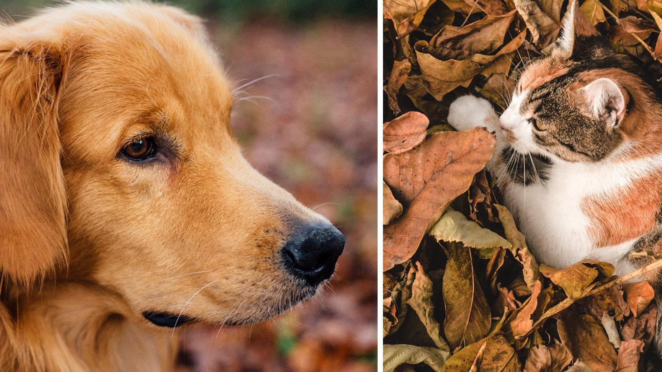 fall pet hazards