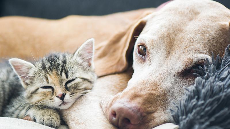 Förstoppning hund katt