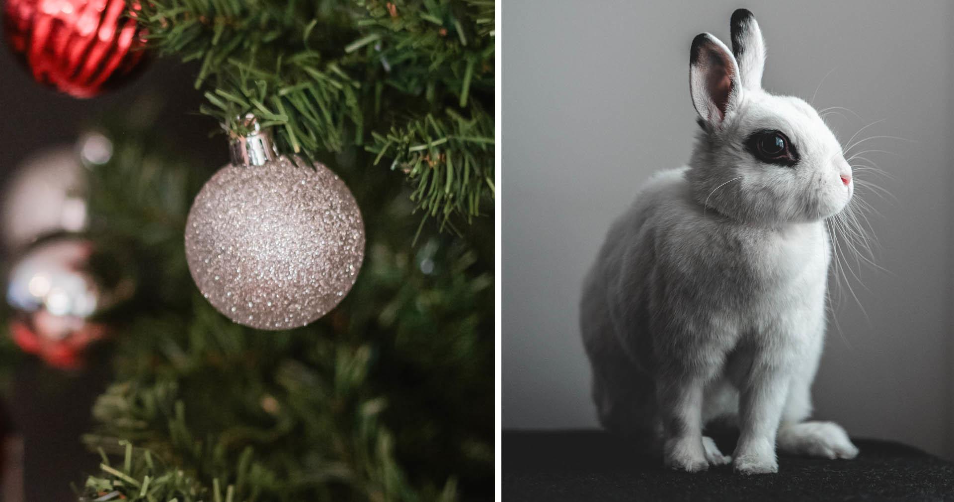 Bunny rabbit and Christmas tree