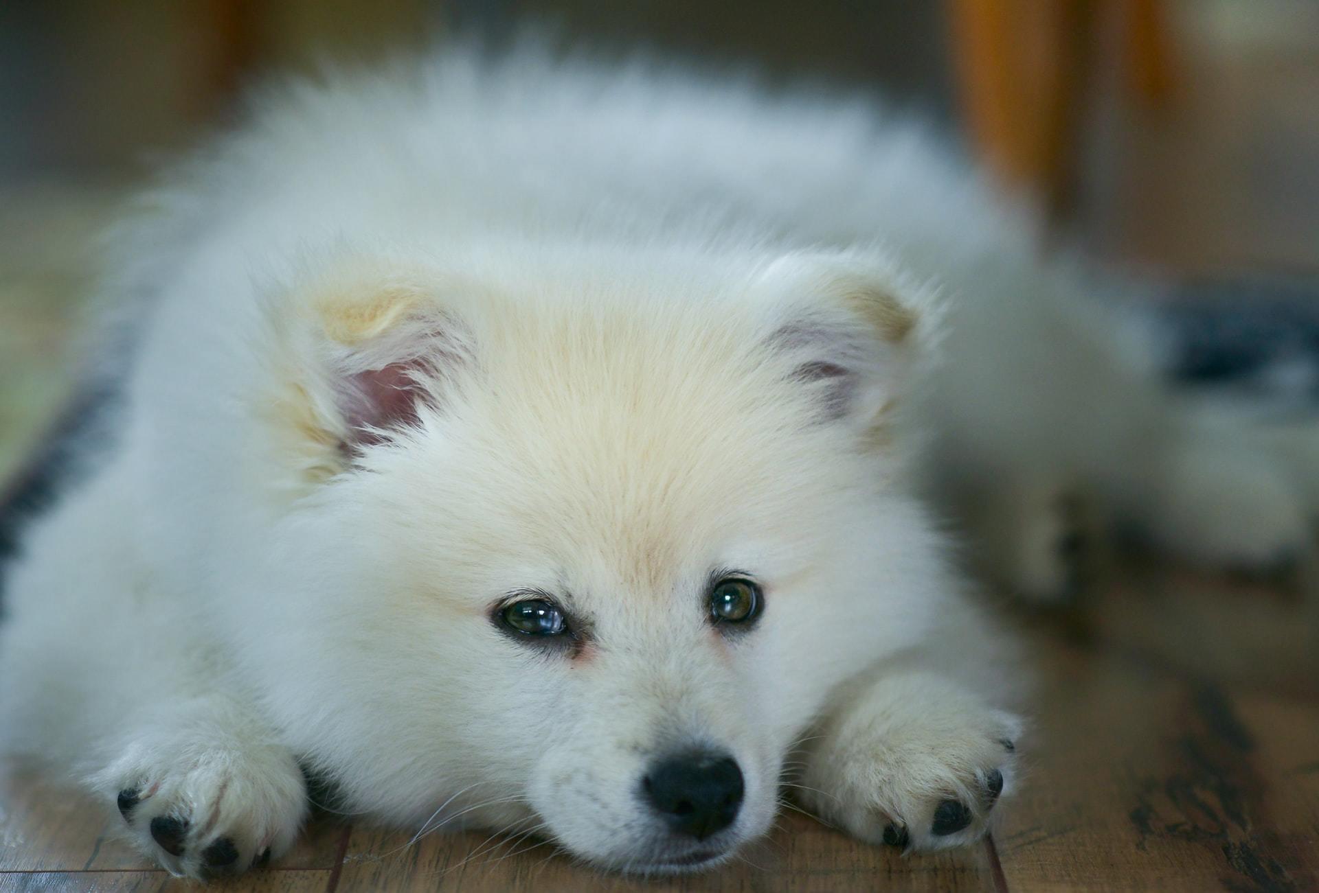 grape toxicity dog