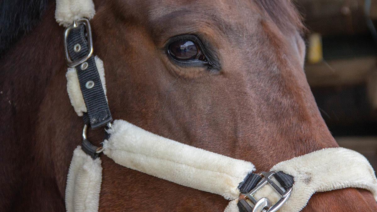 Hästen 4
