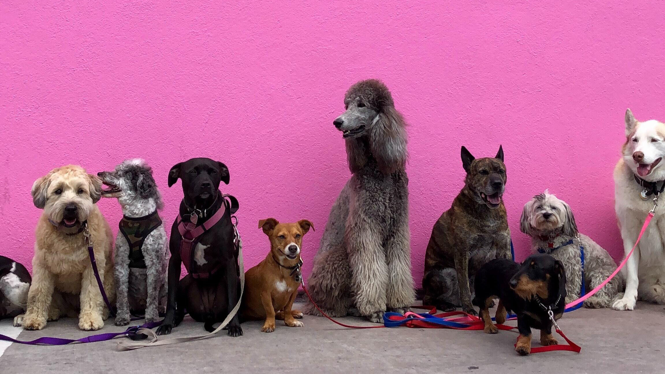 Hundmassan